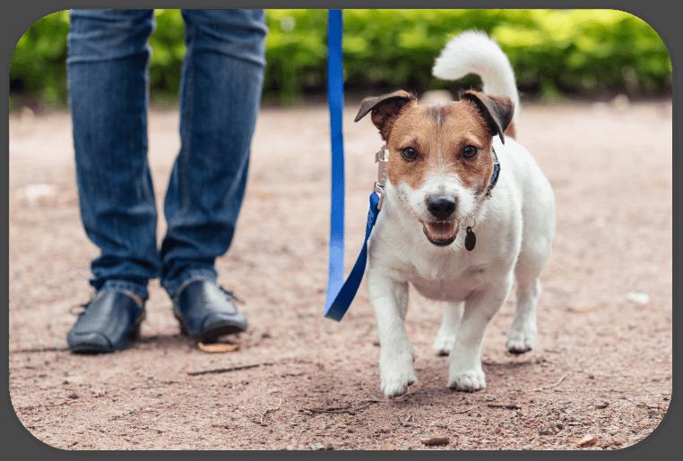 MeTiNa Hundeschule